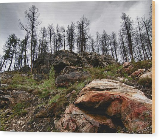 Rocks And Trees 2 Wood Print
