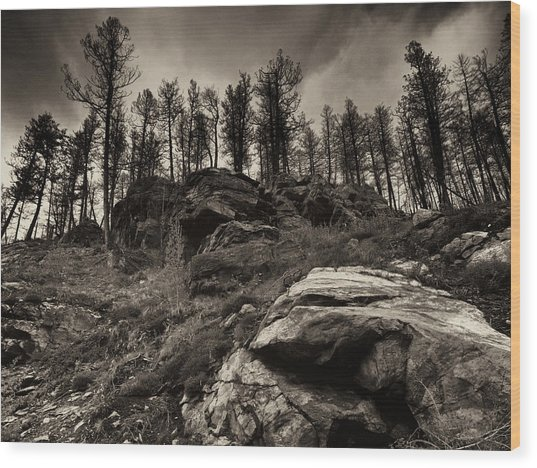 Rocks And Trees And Trees And Rocks Wood Print