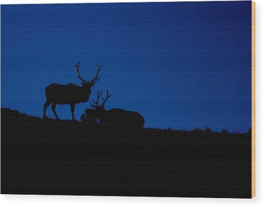 Rocky Mountain Elk Wood Print by Jeff Nelson