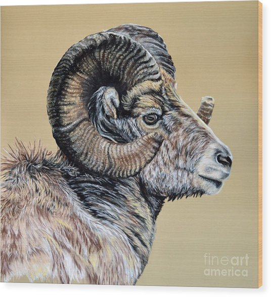 Rocky Mountain Ram Wood Print by Ann Marie Chaffin