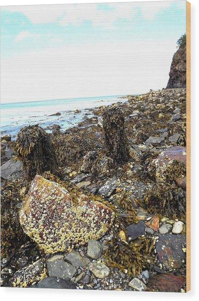 Rocky Shore Wood Print by Dancingfire Brenda Morrell