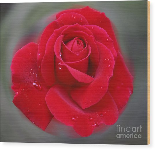 Rolands Rose Wood Print