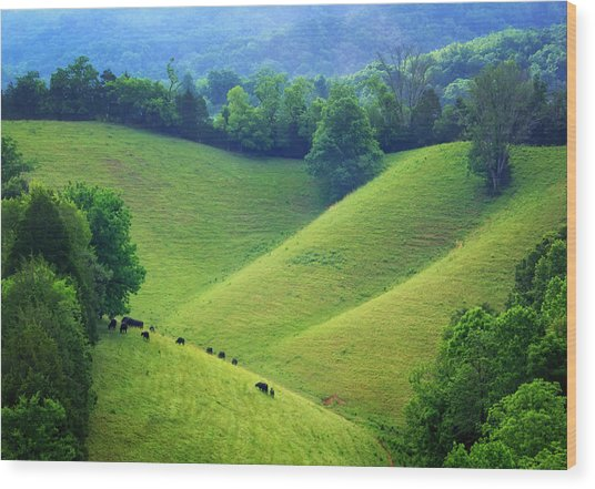 Rolling Hills Of Tennessee Wood Print