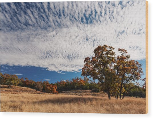 Rolling Hills Of The Texas Hill Country In The Fall - Fredericksburg Texas Wood Print