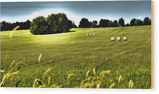 Rolling Pastures Wood Print
