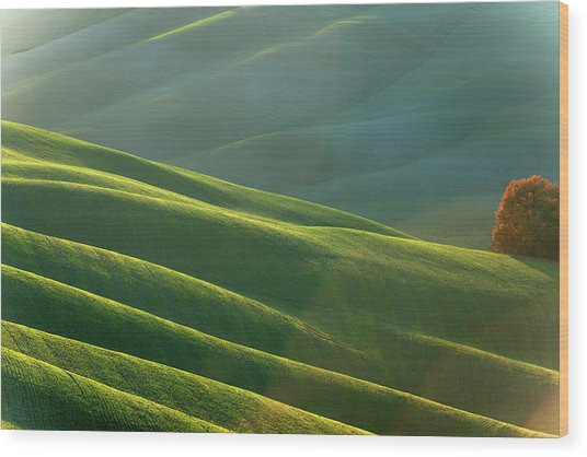 Rolling Tuscany Landscape At Evening Wood Print by Pavliha
