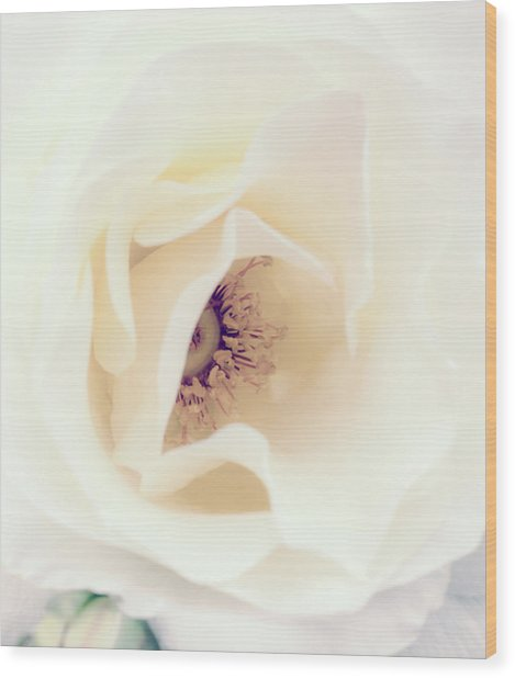 Romance In A Rose Wood Print