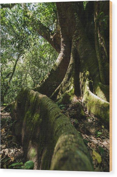 Root Wood Print