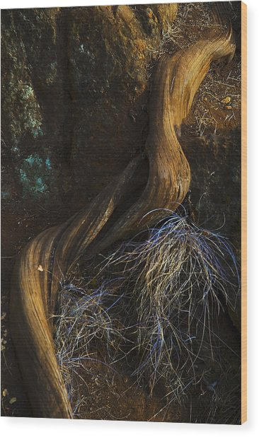 Tree Root Wood Print