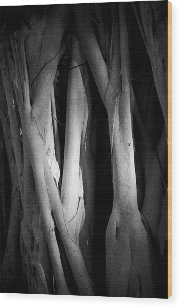 Roots Wood Print by Nancy Edwards