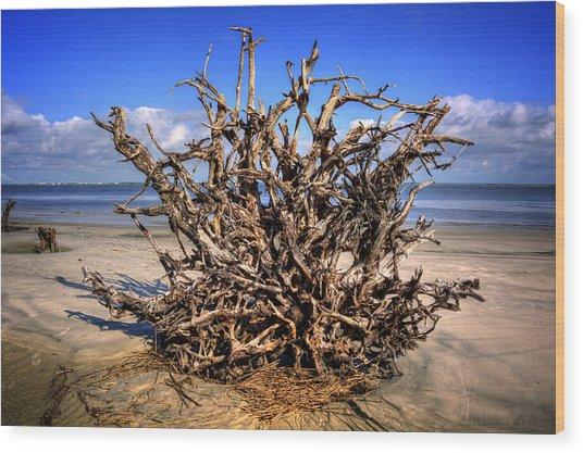 Roots On Jekyll Island Wood Print