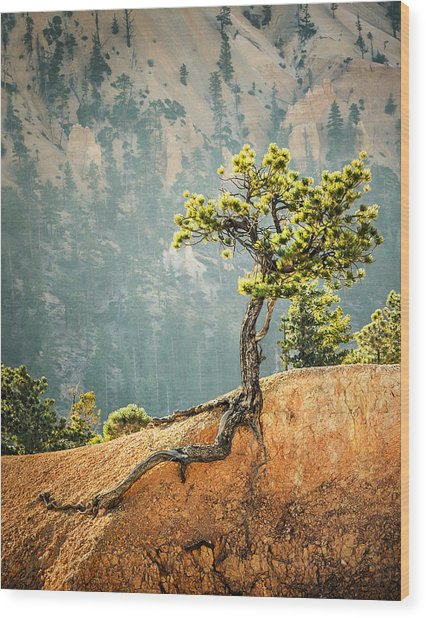 Roots Rock Wood Print by Nancy Strahinic
