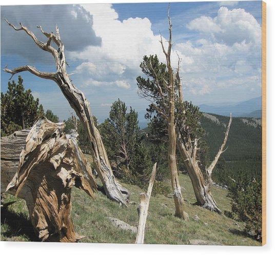 Rosalie Bristlecones Wood Print