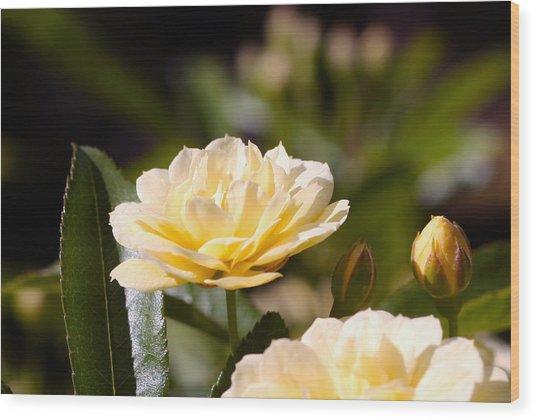 Rose 9 Wood Print