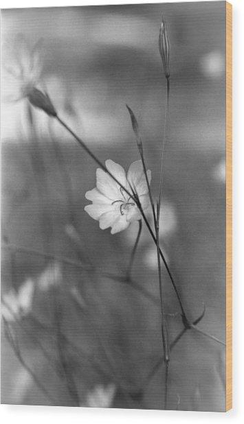 Rose Angel Wood Print