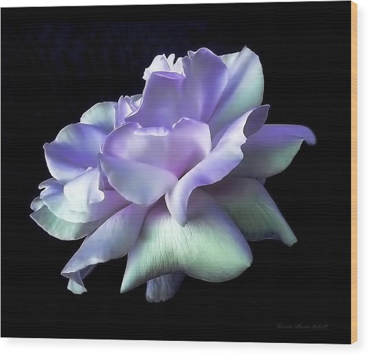 Rose Awakening Floral Wood Print