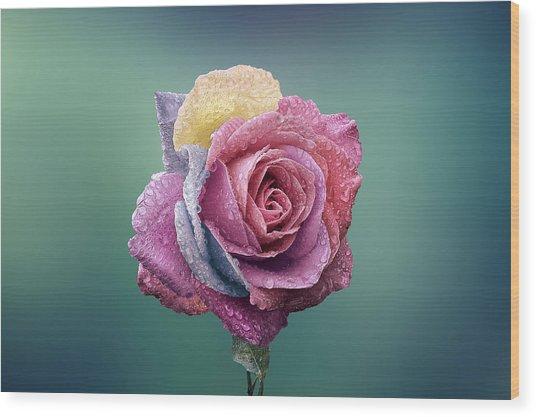 Rose Colorful Wood Print