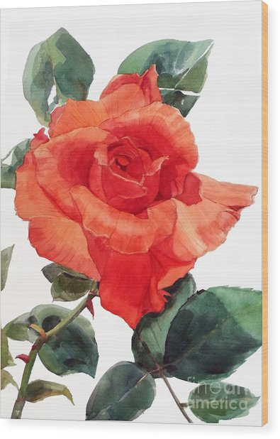 Watercolor Of A Single Red Rose I Call Red Rose Filip Wood Print