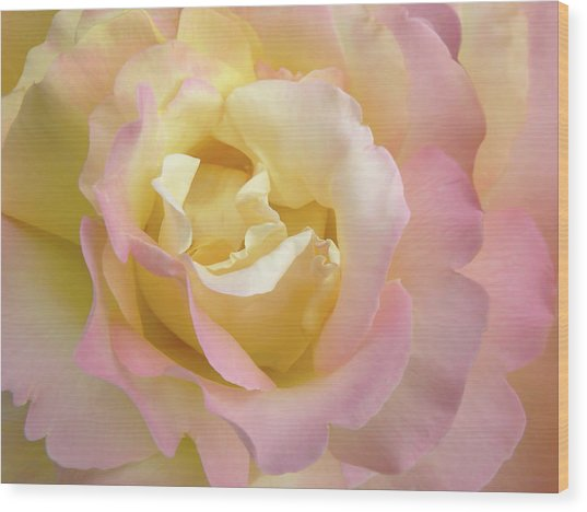 Rose Flower Parfait Wood Print