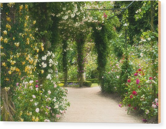 Rose Garden At Alnwick Wood Print