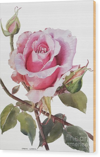 Watercolor Of Pink Rose Grace Wood Print