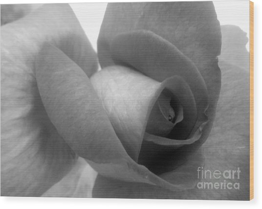 Rose In Black And White Wood Print by Ioanna Papanikolaou