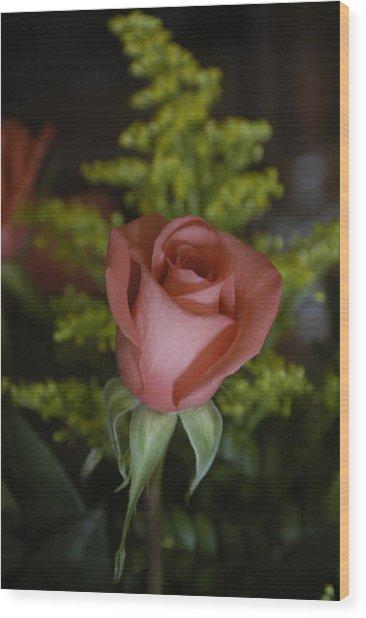 Rose In Bloom Wood Print
