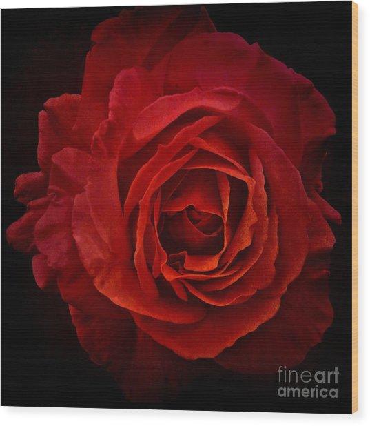 Rose In Red Wood Print