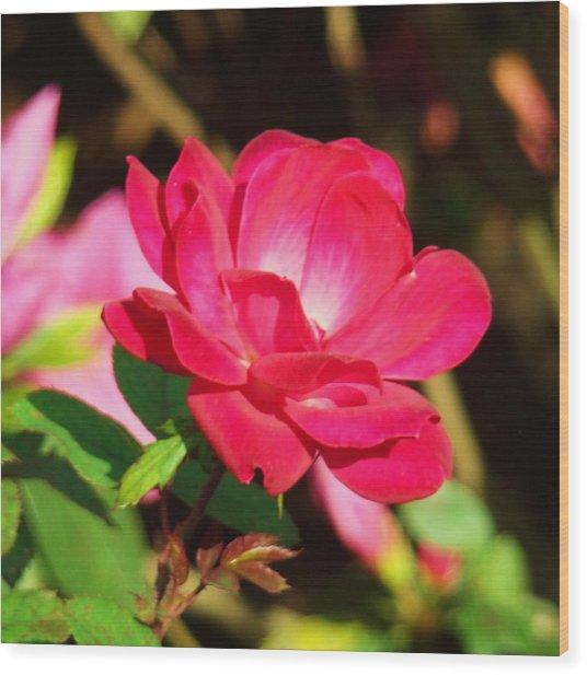 Rose Intensity Wood Print by Van Ness