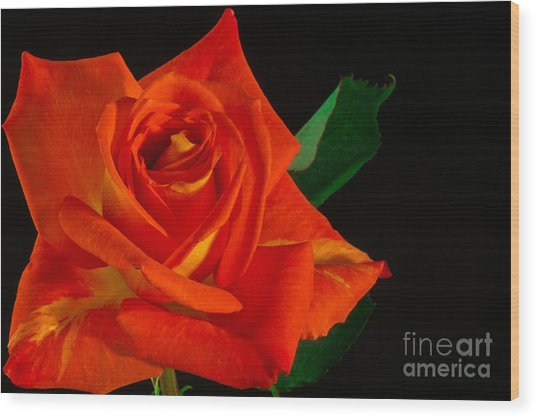 Rose On Fire Wood Print