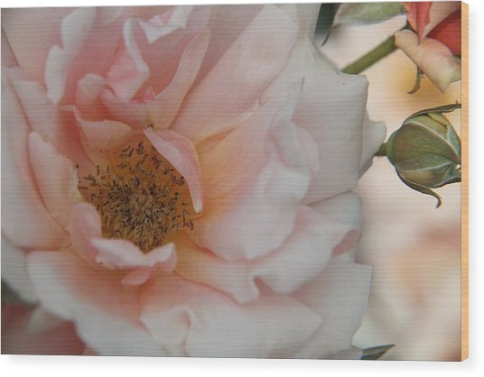 Rose - One Of A Kind Wood Print by Dervent Wiltshire