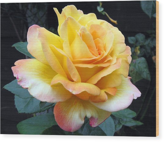 Rose Peace Wood Print
