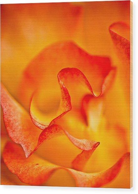 Rose Petals Closeup Wood Print