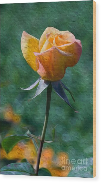Rose Prominence II Wood Print