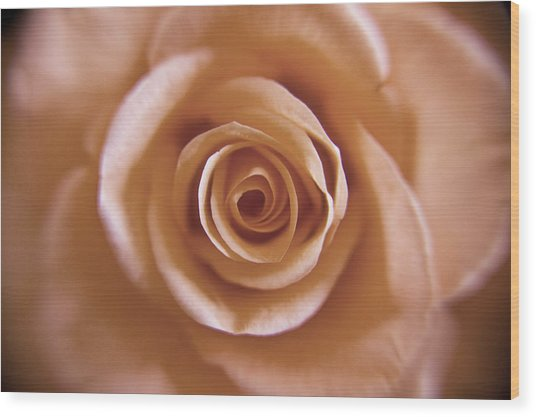 Rose Spiral 3 Wood Print by Kim Lagerhem