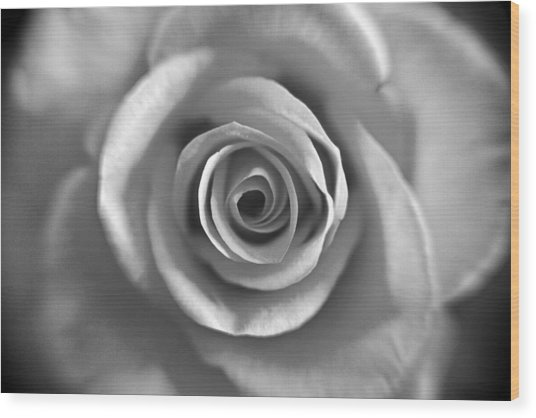 Rose Spiral 4 Wood Print by Kim Lagerhem