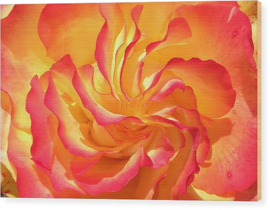 Rose Swirl Wood Print