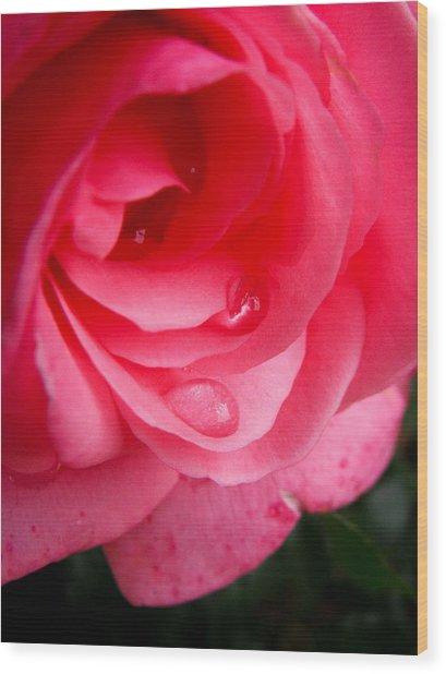 Rose Teardrop Wood Print