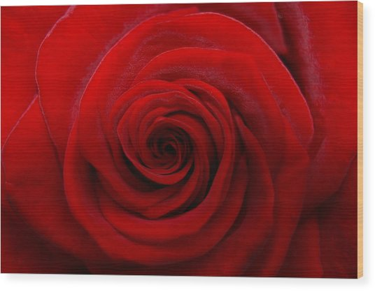 Rose1 Wood Print by Kennith Mccoy