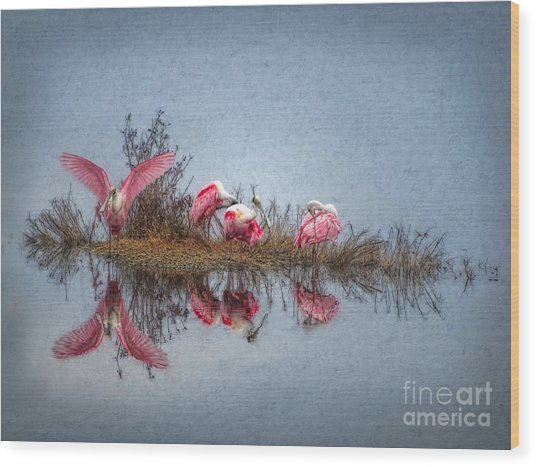 Roseate Spoonbills At Rest Wood Print