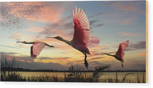 Roseate Spoonbills Of Lake Tarpon Wood Print by M Spadecaller