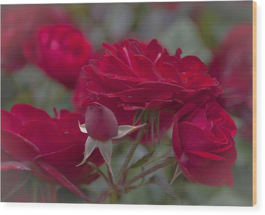 Roses And Roses Wood Print