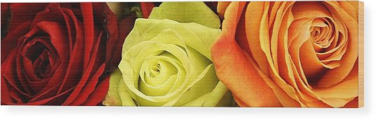 Roses Of Different Colors Wood Print by Bruce Bley