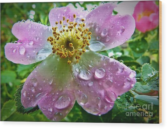 Rosey Raindrops Wood Print