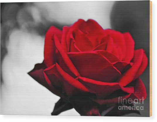 Rosey Red Wood Print