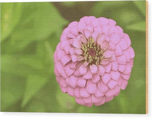 Rosy Corsage Wood Print by JAMART Photography