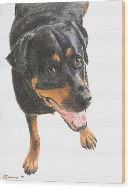 Rottweiler Looking Up Wood Print