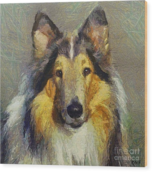 Rough Collie Wood Print