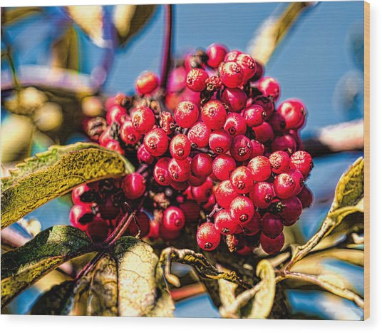Rowan Berries Wood Print