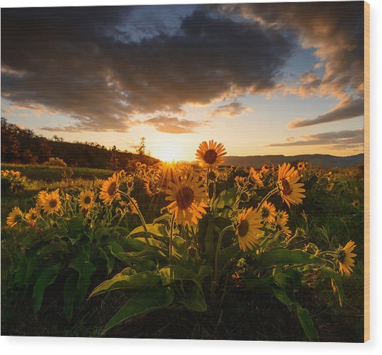 Rowena Crest Sunset Wood Print